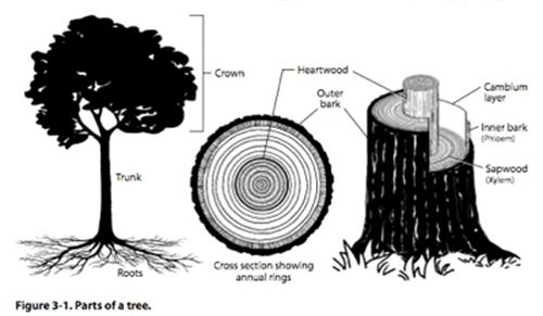 Image result for parts of trees