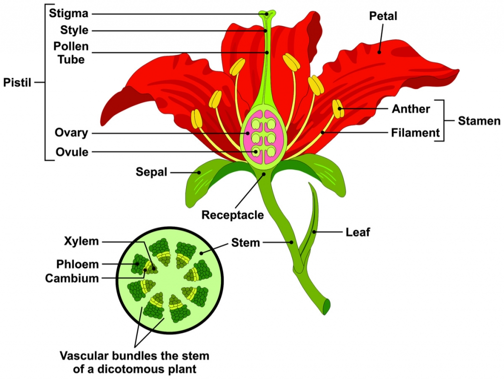 Image result for plant parts